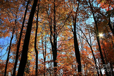 Photograph - Glorious Fall by Karen Adams