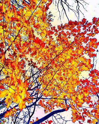 Photograph - Glorious Foliage by Michael Oceanofwisdom Bidwell