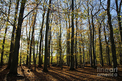 Photograph - Glorious Forest by Kennerth and Birgitta Kullman