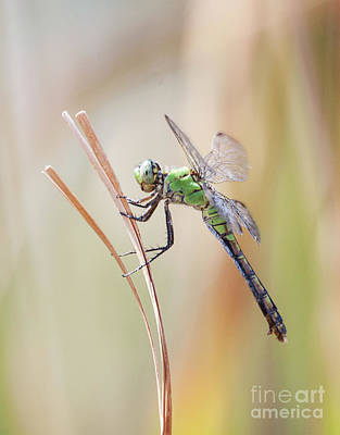 Photograph - Glorious Green Dragon by Ruth Jolly
