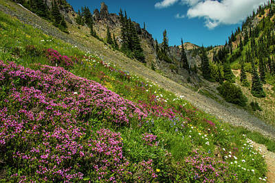 Photograph - Glorious Mountain Heather by Doug Scrima