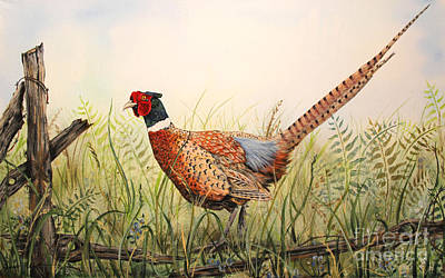 Barbed Wire Fences Painting - Glorious Pheasant-1 by Jean Plout