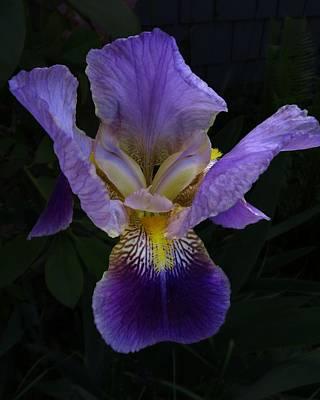 Photograph - Glorious Purple by I'ina Van Lawick