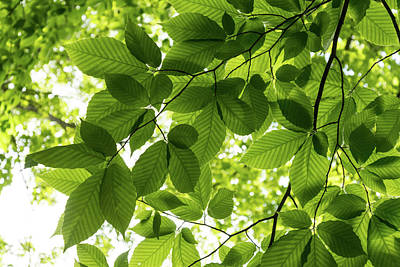 Photograph - Glorious Spring Canopy In More Than Fifty Shades Of Green - Left by Georgia Mizuleva