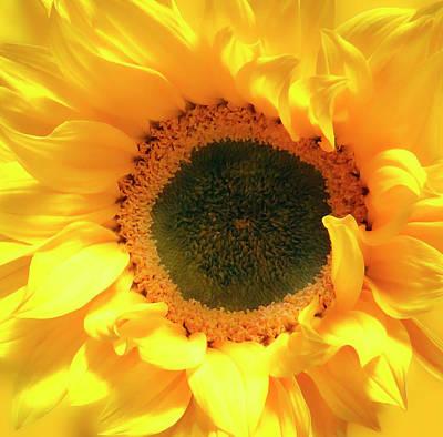 Photograph - Glorious Sunflower 2 by Johanna Hurmerinta