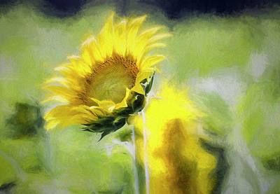 Wild And Wacky Portraits - Glorious Sunflower by Francis Sullivan