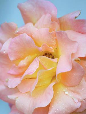 Peach Photograph - Glorious by The Art Of Marilyn Ridoutt-Greene