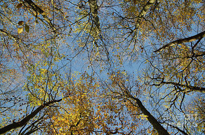Photograph - Glorious Tree Tops by Kennerth and Birgitta Kullman