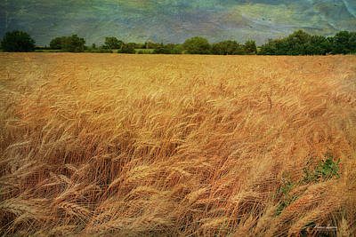 Photograph - Glorious Wheat Field by Anna Louise