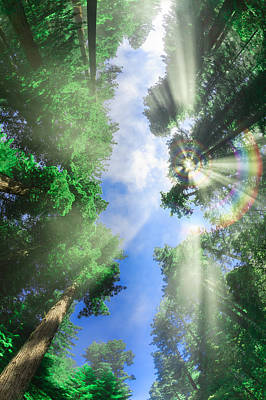 Redwoods Photograph - Glory Amongst Redwoods 2 by Scott Campbell
