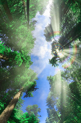 Photograph - Glory Amongst Redwoods 3  by Scott Campbell