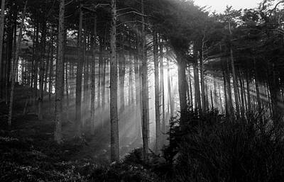 Photograph - Glory Of Morning by HW Kateley