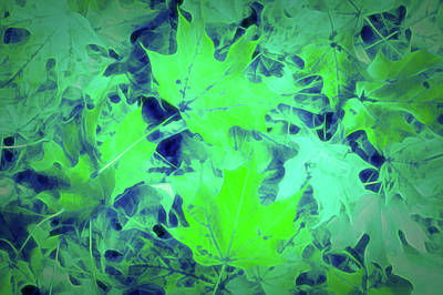 Photograph - Glow In The Dark Green Leaves by Aimee L Maher Photography and Art Visit ALMGallerydotcom