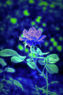 Photograph - Glow In The Dark Knockout Rose Vertical by Aimee L Maher Photography and Art Visit ALMGallerydotcom