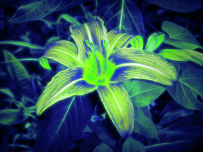Photograph - Glow In The Dark Orange Lily by Aimee L Maher Photography and Art Visit ALMGallerydotcom