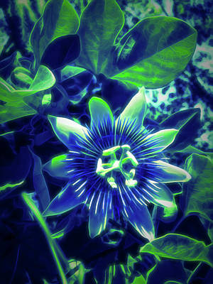 Photograph - Glow In The Dark Passion Flower 1 by Aimee L Maher Photography and Art Visit ALMGallerydotcom