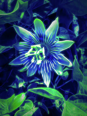 Photograph - Glow In The Dark Passion Flower 4 by Aimee L Maher Photography and Art Visit ALMGallerydotcom