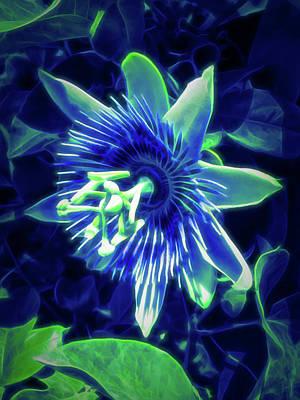 Photograph - Glow In The Dark Passion Flower 5 by Aimee L Maher Photography and Art Visit ALMGallerydotcom