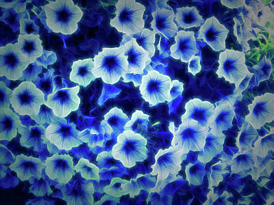 Photograph - Glow In The Dark Purple Petunias by Aimee L Maher Photography and Art Visit ALMGallerydotcom