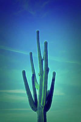 Photograph - Glow In The Dark Saguaro Cactus by Aimee L Maher ALM GALLERY