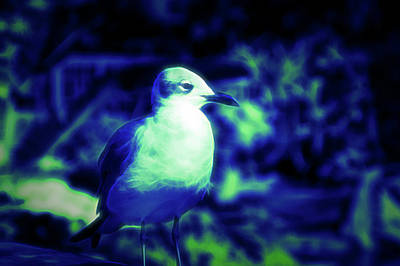 Photograph - Glow In The Dark Seagull by Aimee L Maher Photography and Art Visit ALMGallerydotcom
