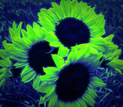 Photograph - Glow In The Dark Sunflower Bouquet by Aimee L Maher Photography and Art Visit ALMGallerydotcom