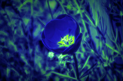 Photograph - Glow In The Dark Tulip by Aimee L Maher Photography and Art Visit ALMGallerydotcom