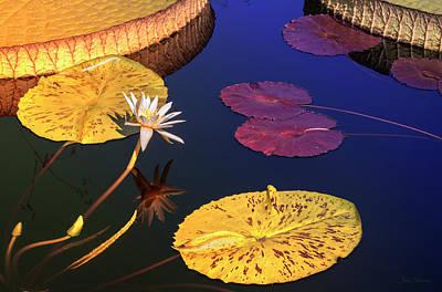 Photograph - Glow by John Rivera