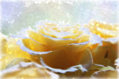 Rose Digital Art - Glow Of The Rose by Lilia D