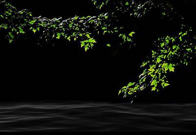 Glow On Leaves Art Print by Art Spectrum