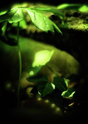 Mayapple Photograph - Glow by Rebecca Sherman