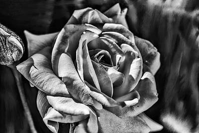 Photograph - glowing aside BW by Leif Sohlman