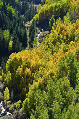 Photograph - Glowing Aspens Below Million Dollar Highway by Ray Mathis