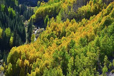 Photograph - Glowing Aspens In The Valley Below Highway 550 by Ray Mathis