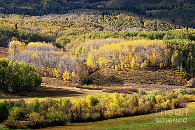 Photograph - Glowing Aspens by Scott Kemper