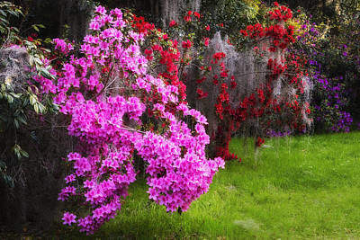 Photograph - Glowing Azaleas by Ken Barrett