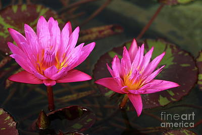Photograph - Glowing Beauties by Christiane Schulze Art And Photography