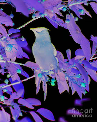 Art Print featuring the photograph Glowing Cedar Waxwing by Smilin Eyes  Treasures