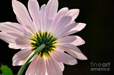 Photograph - Glowing by Deb Halloran