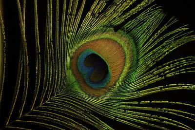 Photograph - Glowing Eye by Douglas Barnett