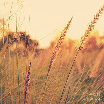 Glowing Fountain Grass - Hipster Photo Square Art Print by Charmian Vistaunet