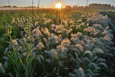Photograph - Glowing Fox Tails In Glacial Park by Ray Mathis