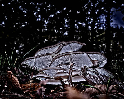 Photograph - Glowing Fungus by Philip A Swiderski Jr