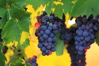 Photograph - Glowing Grapes by Lynn Hopwood