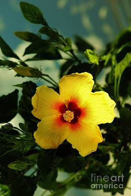 Photograph - Glowing Hibiscus by Craig Wood