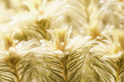 Photograph - Glowing In Sunlight Golden Plants by Daniela Constantinescu
