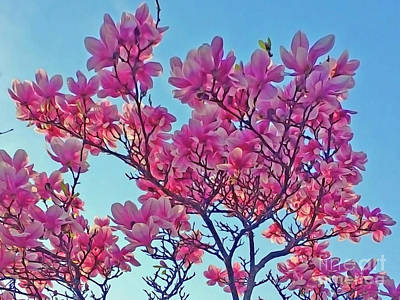 Photograph - Glowing Magnolia by Jasna Dragun
