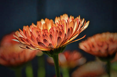 Photograph - Glowing Orange #h6 by Leif Sohlman