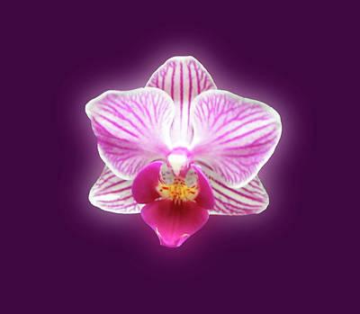 Photograph - Glowing Orchid by Johanna Hurmerinta