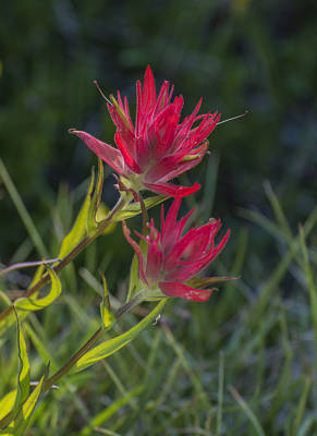 Photograph - Glowing Paintbrush by Loree Johnson